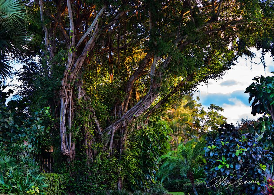 Enchanted Forest Photography Art | cosimo scianna
