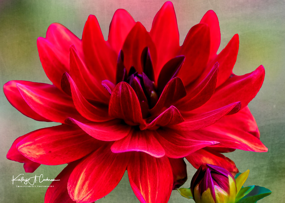 1122031 Copy Photography Art   Images2Impact