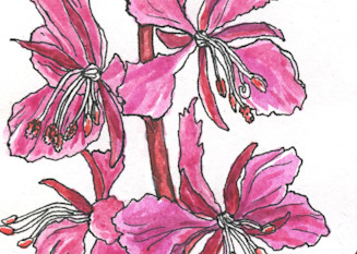 Alaska Fireweed Painting
