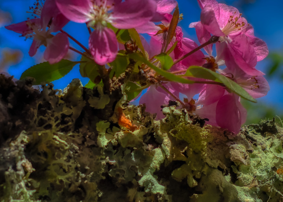 Bloom And Moss Photography Art | FocusPro Services, Inc.