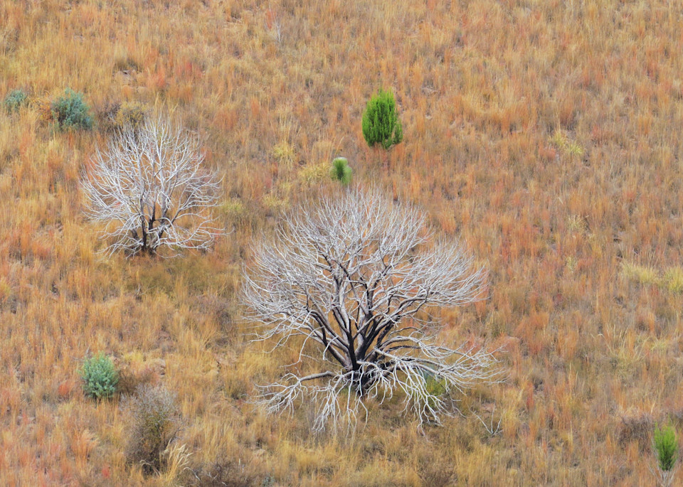 Winter Grass & Trees Photography Art | Galeria Mañana
