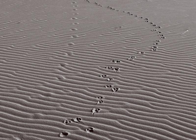 Sandy Tracks #1 Photography Art   Galeria Mañana