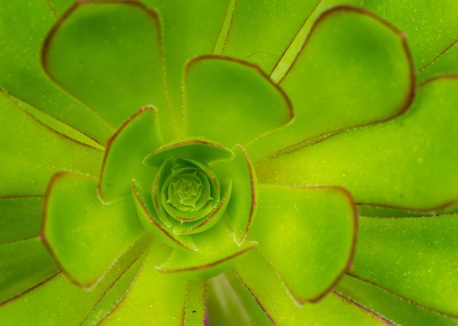 Botanicals: Succulent #2 - garden macro photogaph print