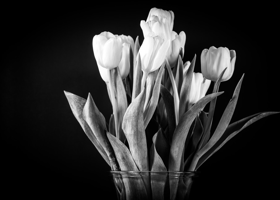 Tulips in Black and White - flower photographic print