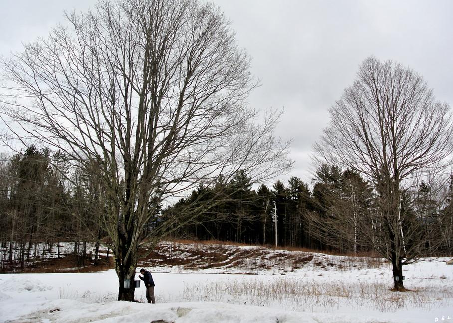 Winter Sap Run