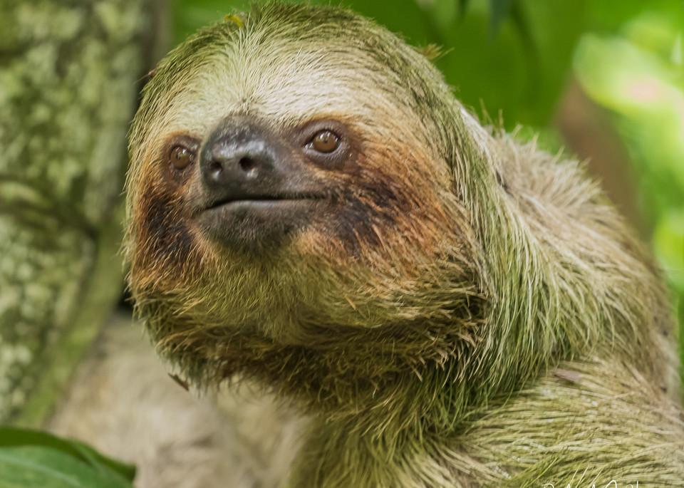 Sloth, Costa Rica, Bogardin, Photography