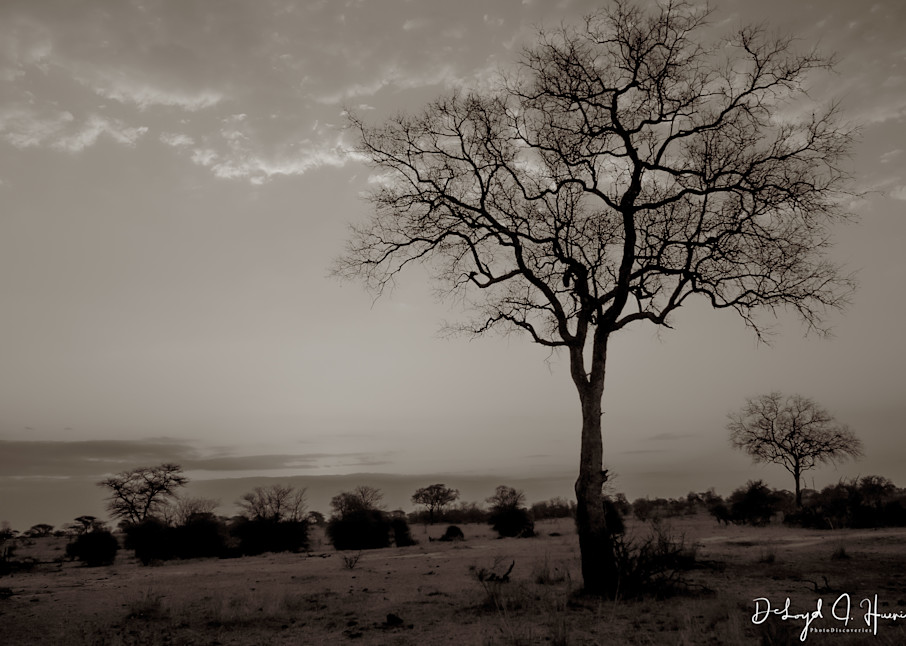 """The Tree Becomes Your Focus"""", PhotoDiscoveries, Africa, Sunset"""