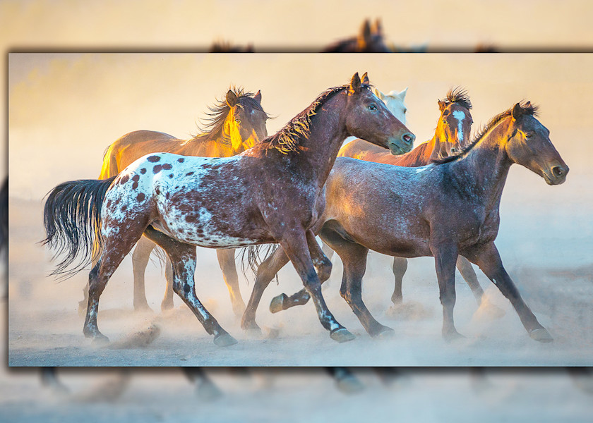 Appaloosa Running Pano 3 D Photography Art | Whispering Impressions
