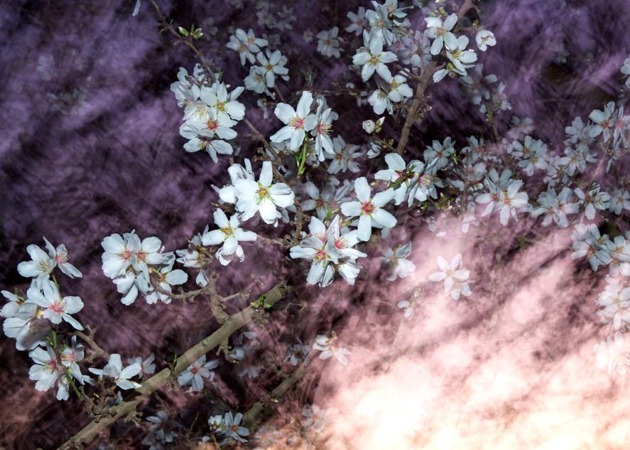 Almond Blossom Galaxy Photography Art   Josh Kimball Photography