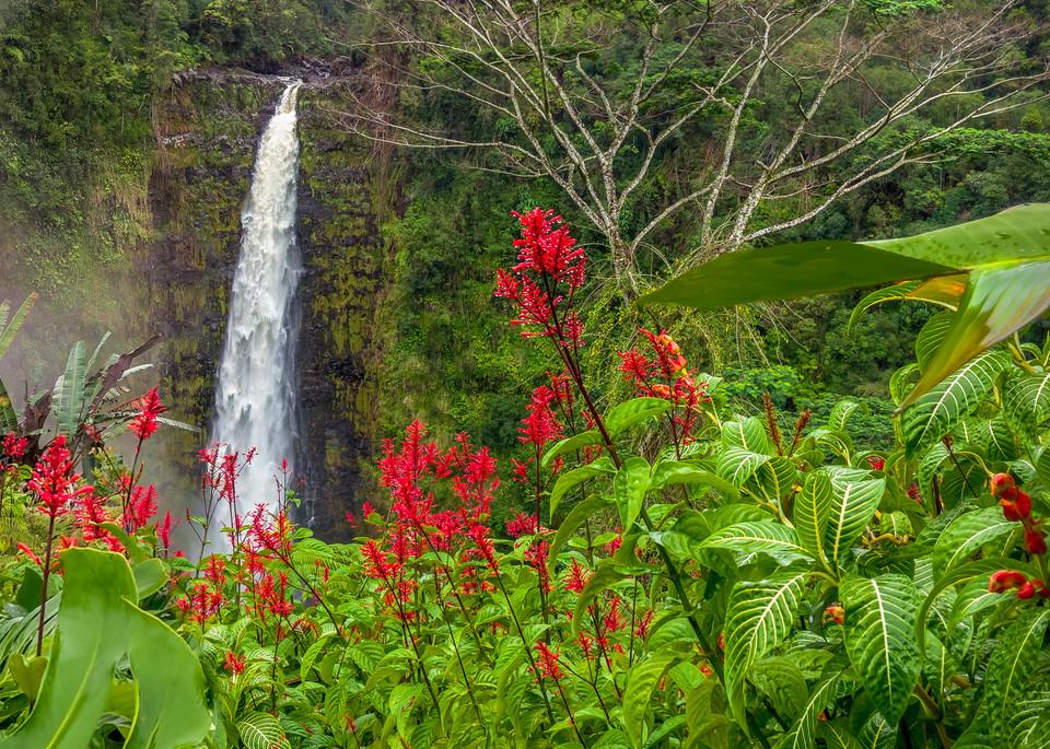 Akaka In Red Photography Art | Bird In Paradise