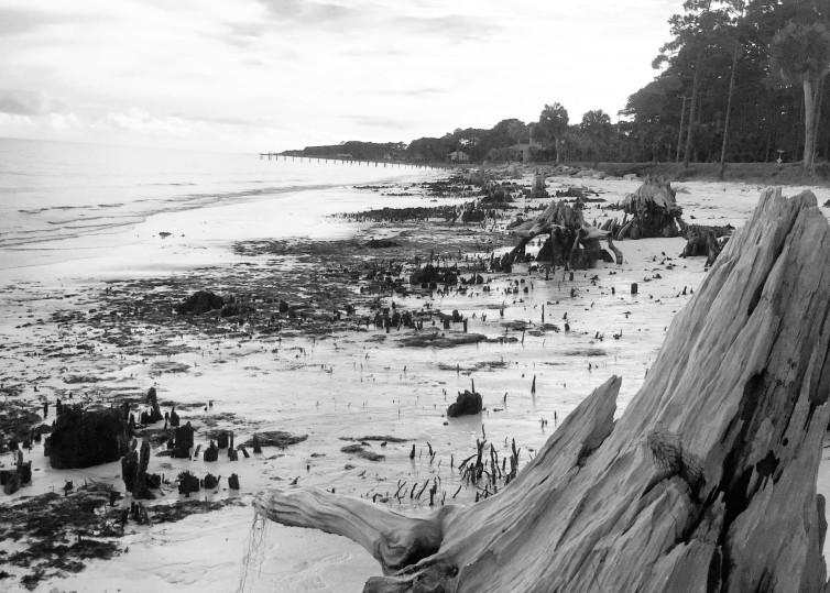 Florida's Forgotten Coast Art | Cindy Bettinger