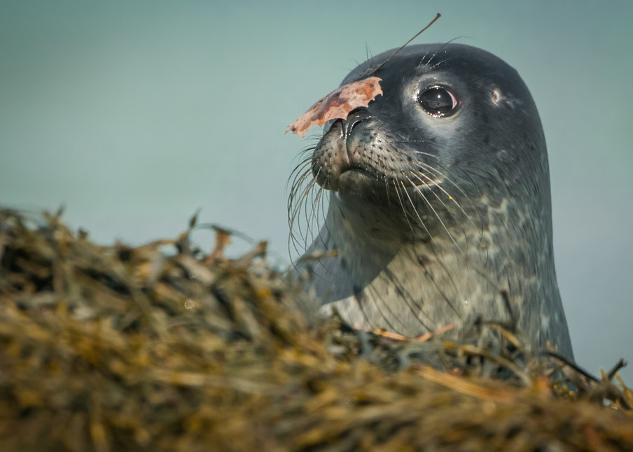 Seal Camouflage Photography Art | Monteux Gallery