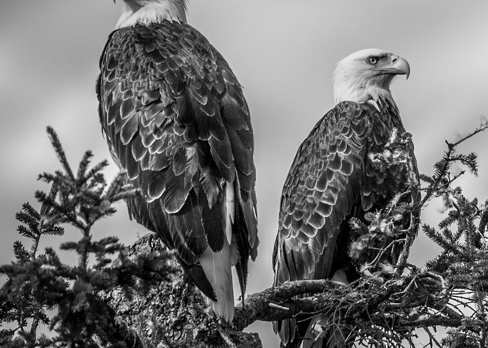Two Eagles Photography Art | Monteux Gallery