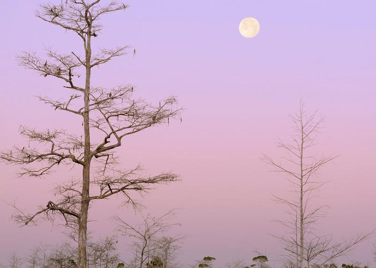 Constance Mier fine art Everglades prints