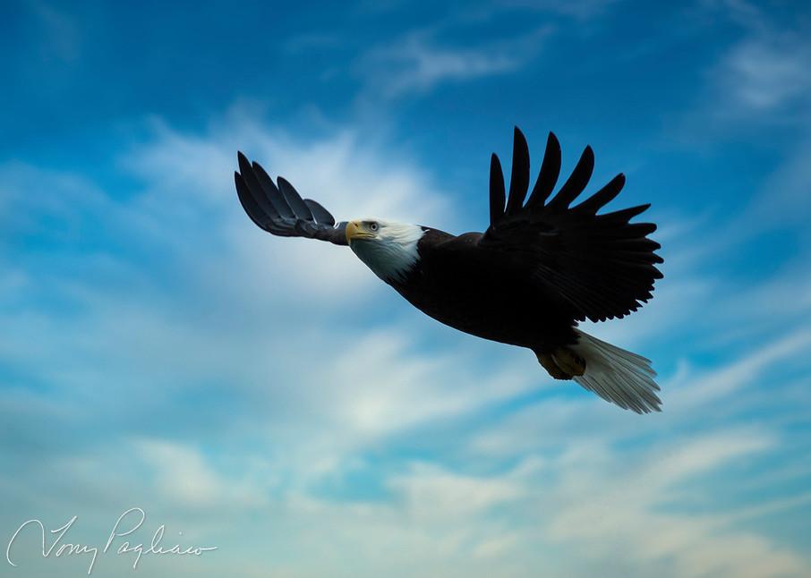 Majestic Eagle Art | Tony Pagliaro Gallery