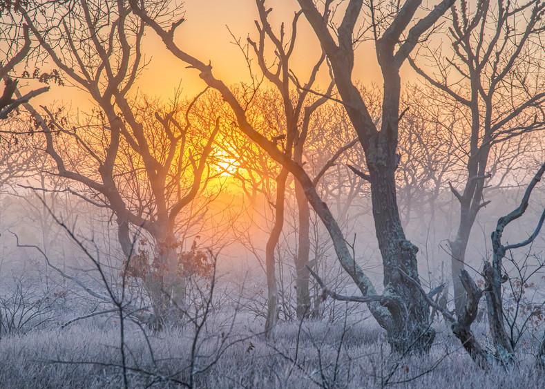 Long Point Frosty Woods Art | Michael Blanchard Inspirational Photography - Crossroads Gallery