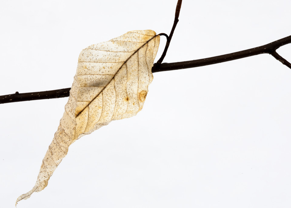 Last Leaf Photography Art | Robert Leaper Photography