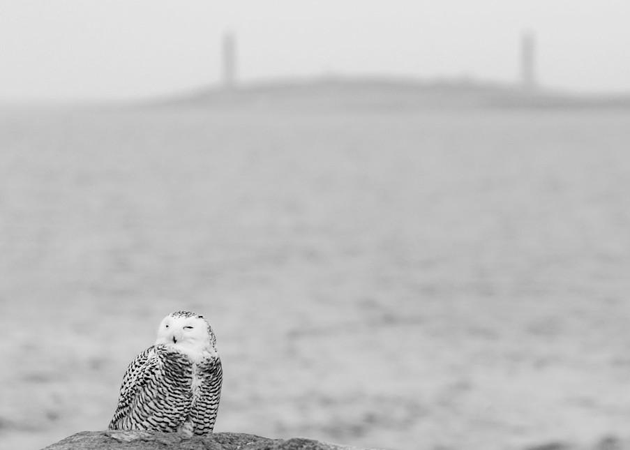 Snowy Owl Art | capeanngiclee