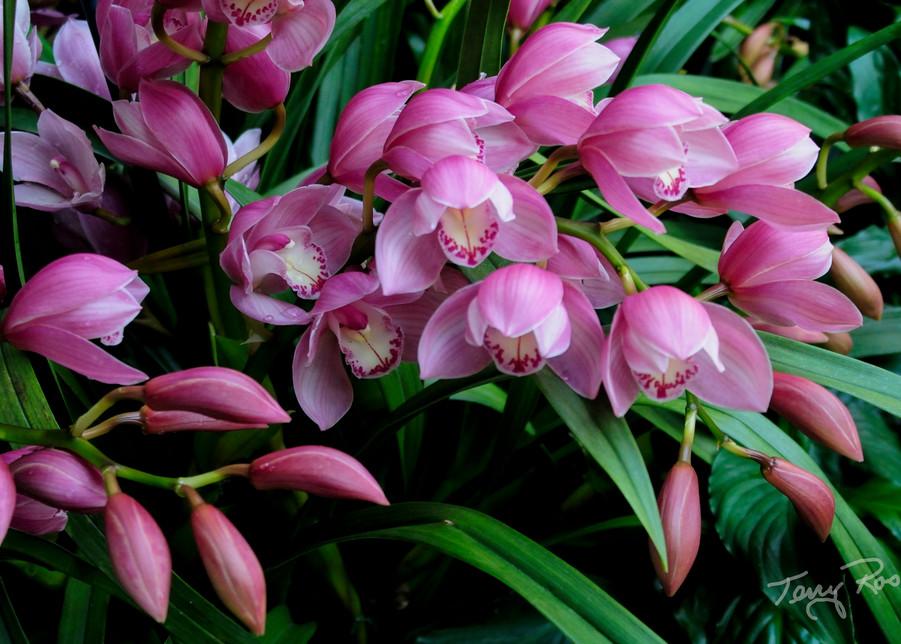 Beautiful Flowers, Longwood Gardens, Photo by Terry Rosiak