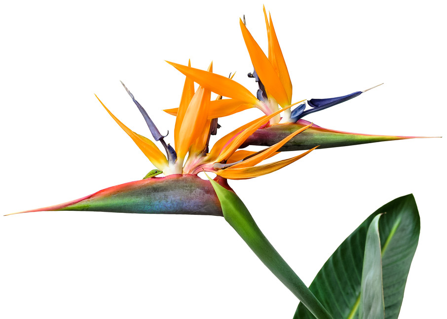3 Heads Are Better Than One Photography Art | Bird In Paradise