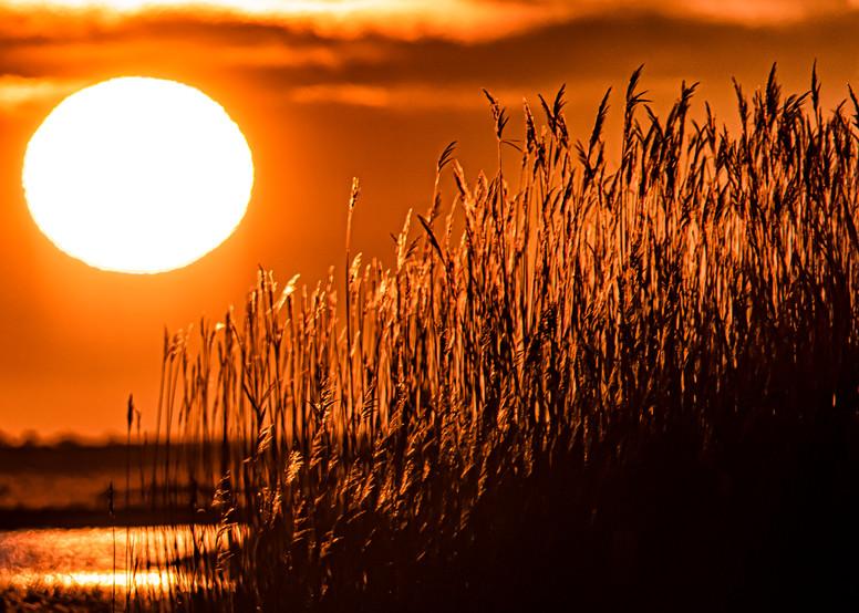 Qunasoo Winter Reeds Sunrise Art | Michael Blanchard Inspirational Photography - Crossroads Gallery