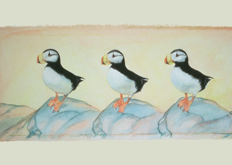 Puffin Rock Giclee Art Prints