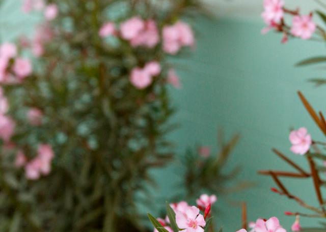 Spring Feeling Photography Art | Belathée Fine Arts by Belathée Photography