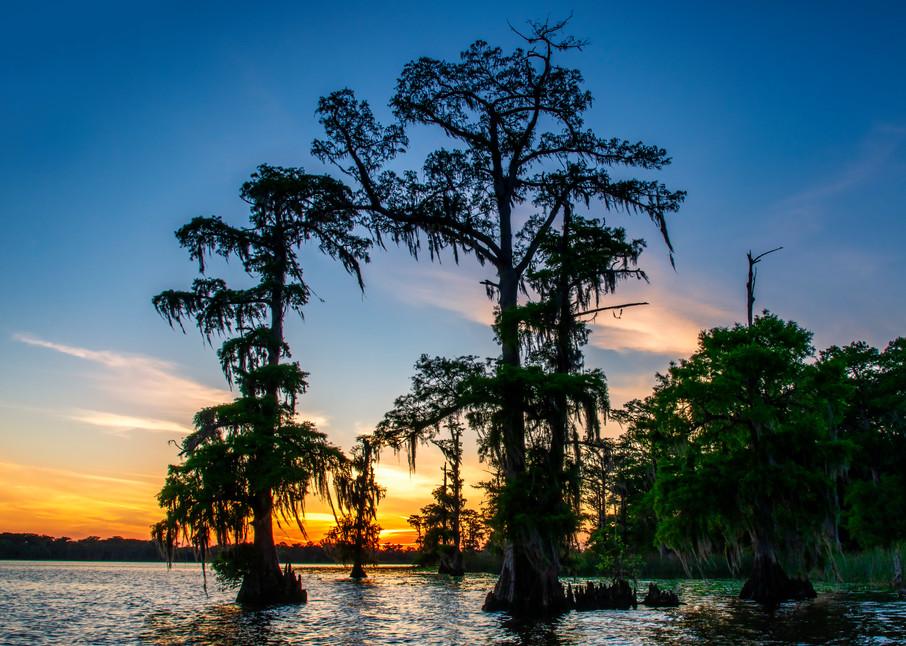 Lake Mauepas evening - Louisiana swamp fine-art photography prints