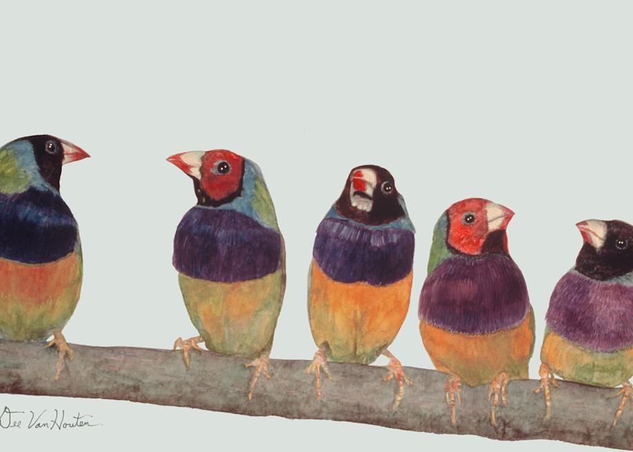 Gouldian Finches Gouache Painting by Dee Van Houten
