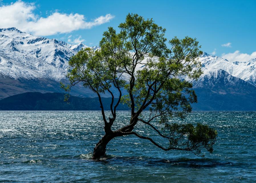Wanaka Tree Photography Art | Kit Noble Photography