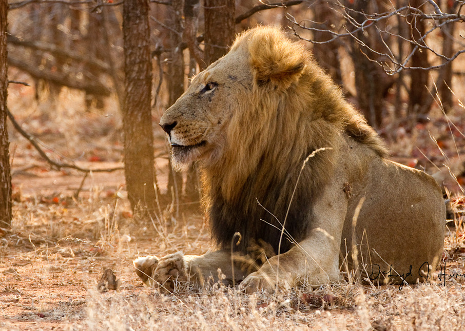 """Jungle King"" ,PhotoDiscoveries, Huenink"
