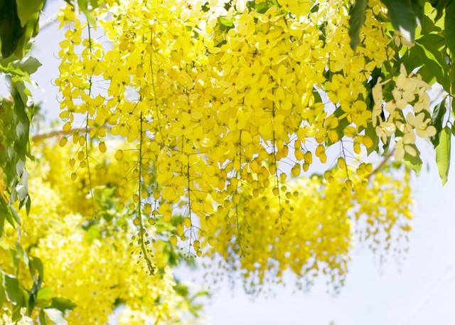 Happy & Yellow Photography Art   Belathée Fine Arts by Belathée Photography