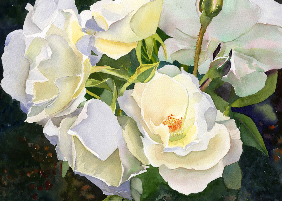 Beautiful Boston Peaceful Garden White Rose Print