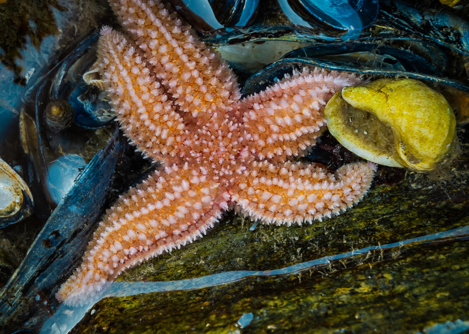 Sea Star & Friends Photography Art   Monteux Gallery