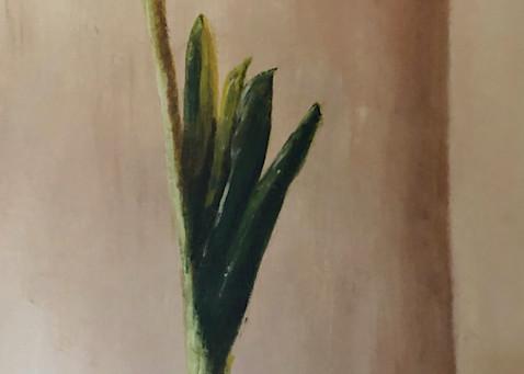 Amaryllis Art | Roost Studios, Inc.