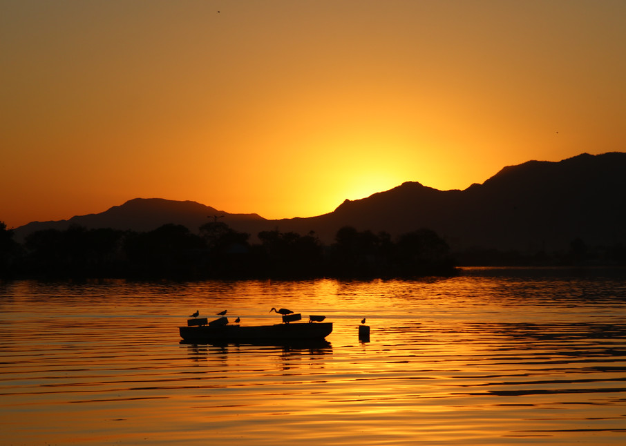 Bird sunset boat