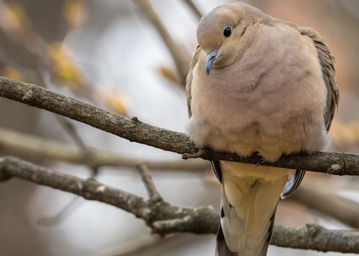 Dove - I see you seeing me - shop fine art prints | Closer Views