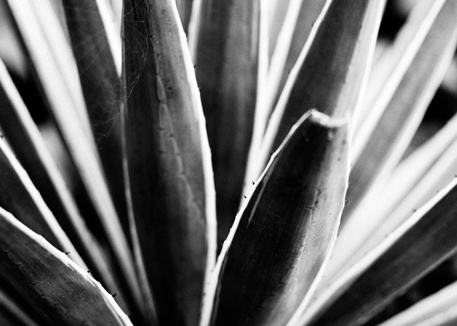 Desert Still  Photography Art | Belathée Fine Arts by Belathée Photography
