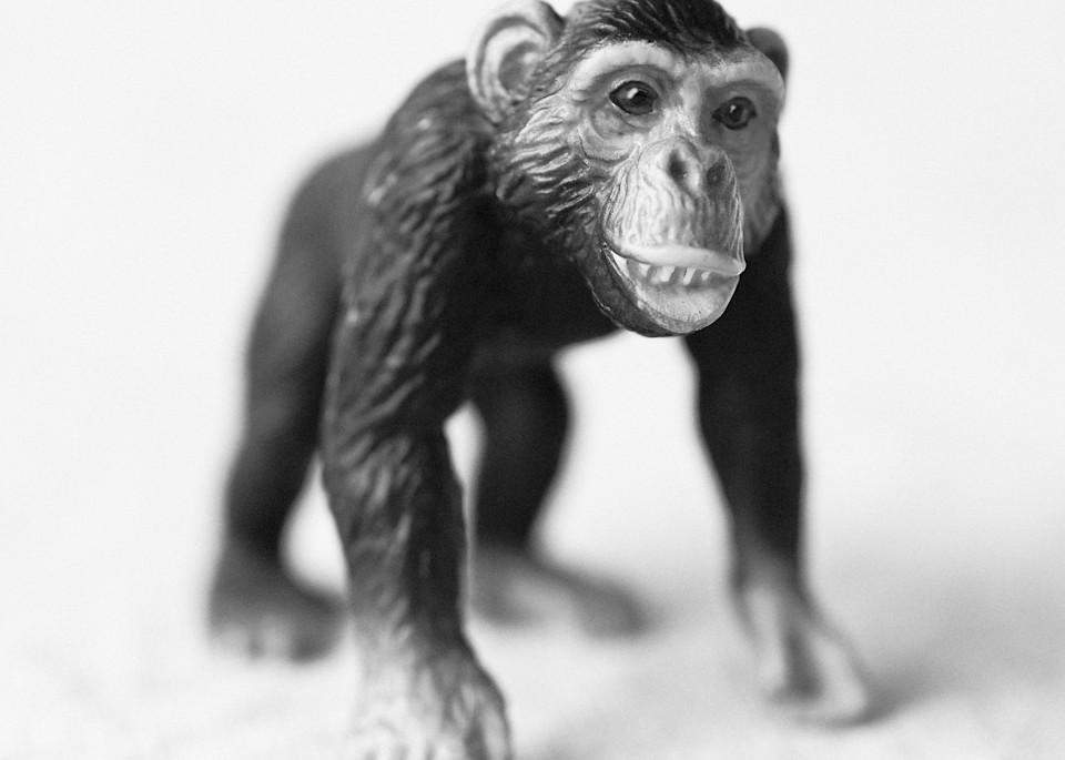 Chimpanzee Photography Art | Roman Coia Photographer
