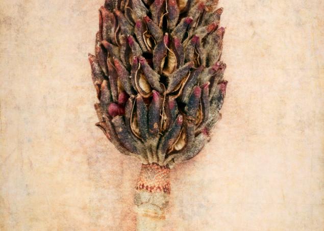 Seed Pods No.3 Photography Art | Doug Landreth Photography