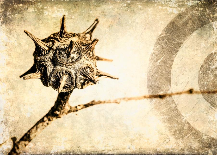 Seed Pod Targeting Photography Art | Doug Landreth Photography