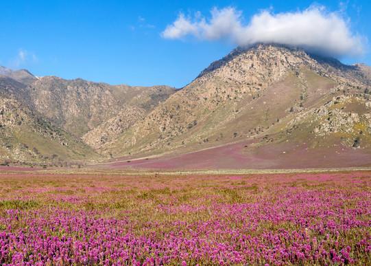 Eastern Sierra Bloom Photography Art | Josh Kimball Photography