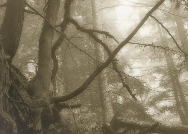 Hocking Hills Oh 01 Photography Art   Mark Steele Photography Inc