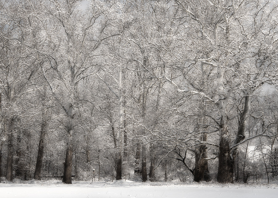 Winter Sycamore - Michael Sandy Photography