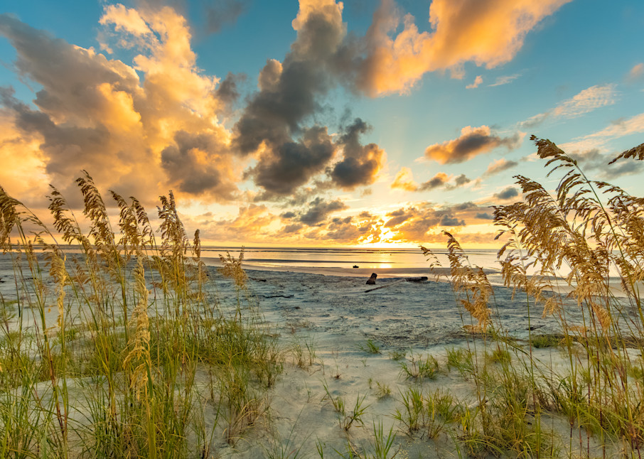sea_oats_sunrise