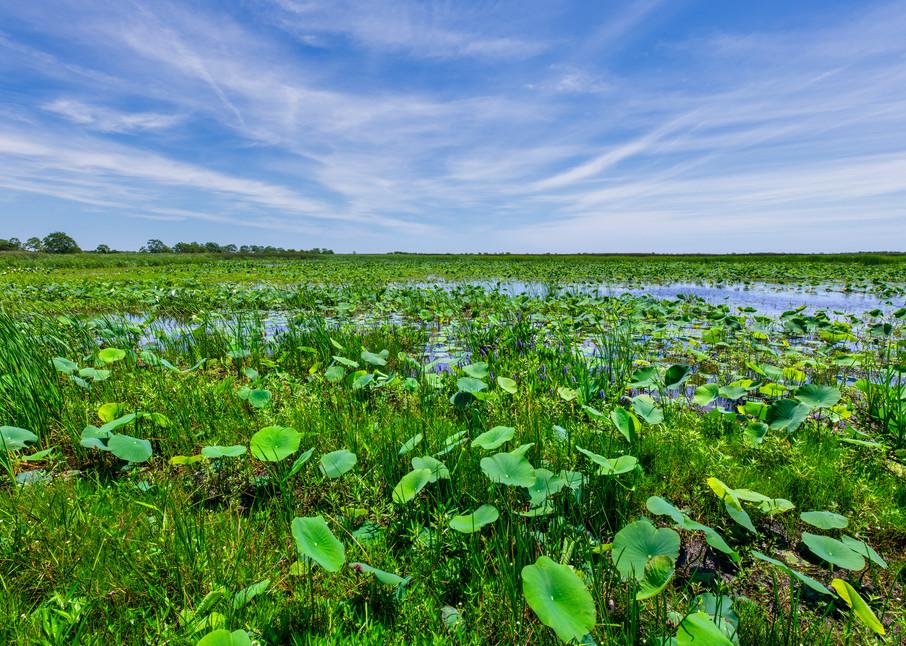 View of Cameron Prairie - Louisiana fine-art photography prints