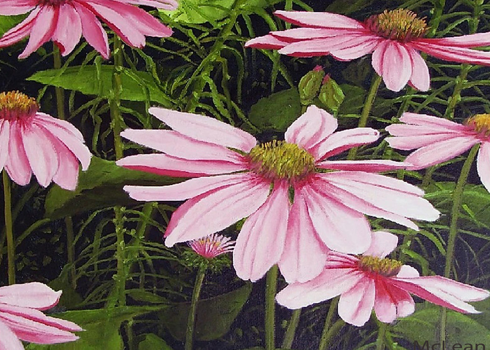 In the Pink , From an Original Oil Painting