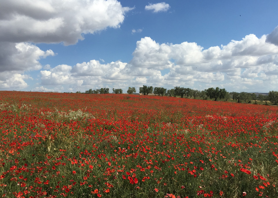 'poppy Field' I  Bovino, Apulia, It Art | Cera Arts