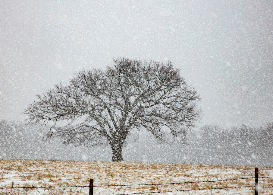 Hard Snow Trees 4533 Snow 20  Photography Art | Koral Martin Healthcare Art