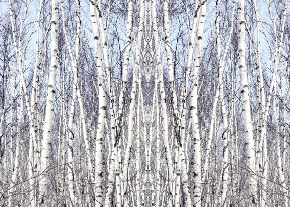 Birch Zen III, by Laura Grisamore